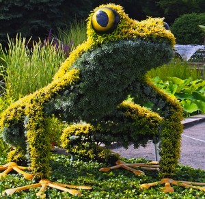 frog-yellow_by_mim