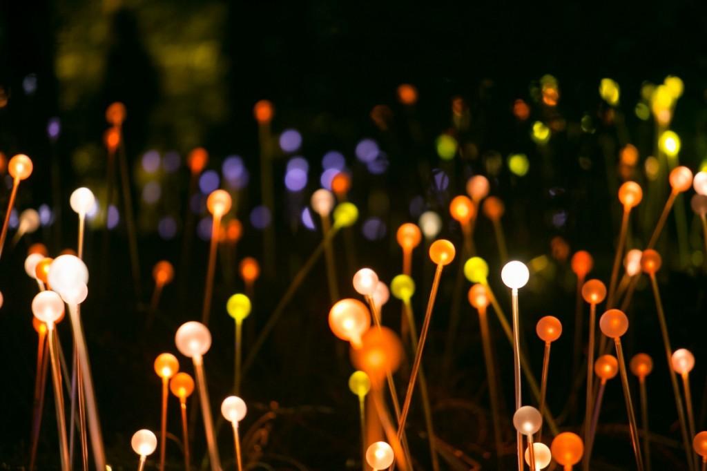 bruce-munro_forest-of-light_c_by-jason-getz