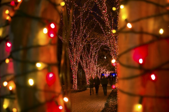 CX-garden-lights-holiday-nights-d