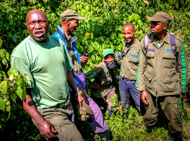 Gorilla guides steer