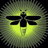 serenbe bug