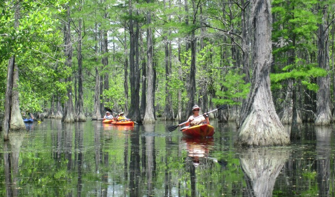 Kayaking at George L. Smith State Park, on the way to Savannah, provides scenery above the ground and in the reflection of the blackwater xxxxx.