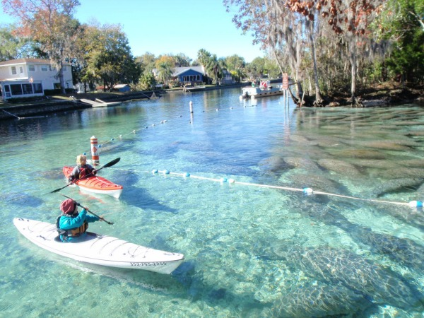 With winter kayaking, you're in the water ... but not really in the water. Photo: Crystal River Kayak Co. and Dive Center