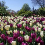 Atlanta Botanical Garden hits Top 10