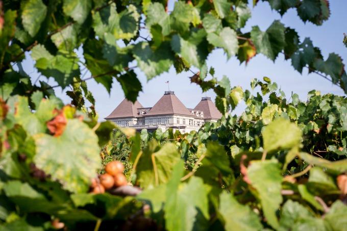 Chateau thru the grape leaves crop